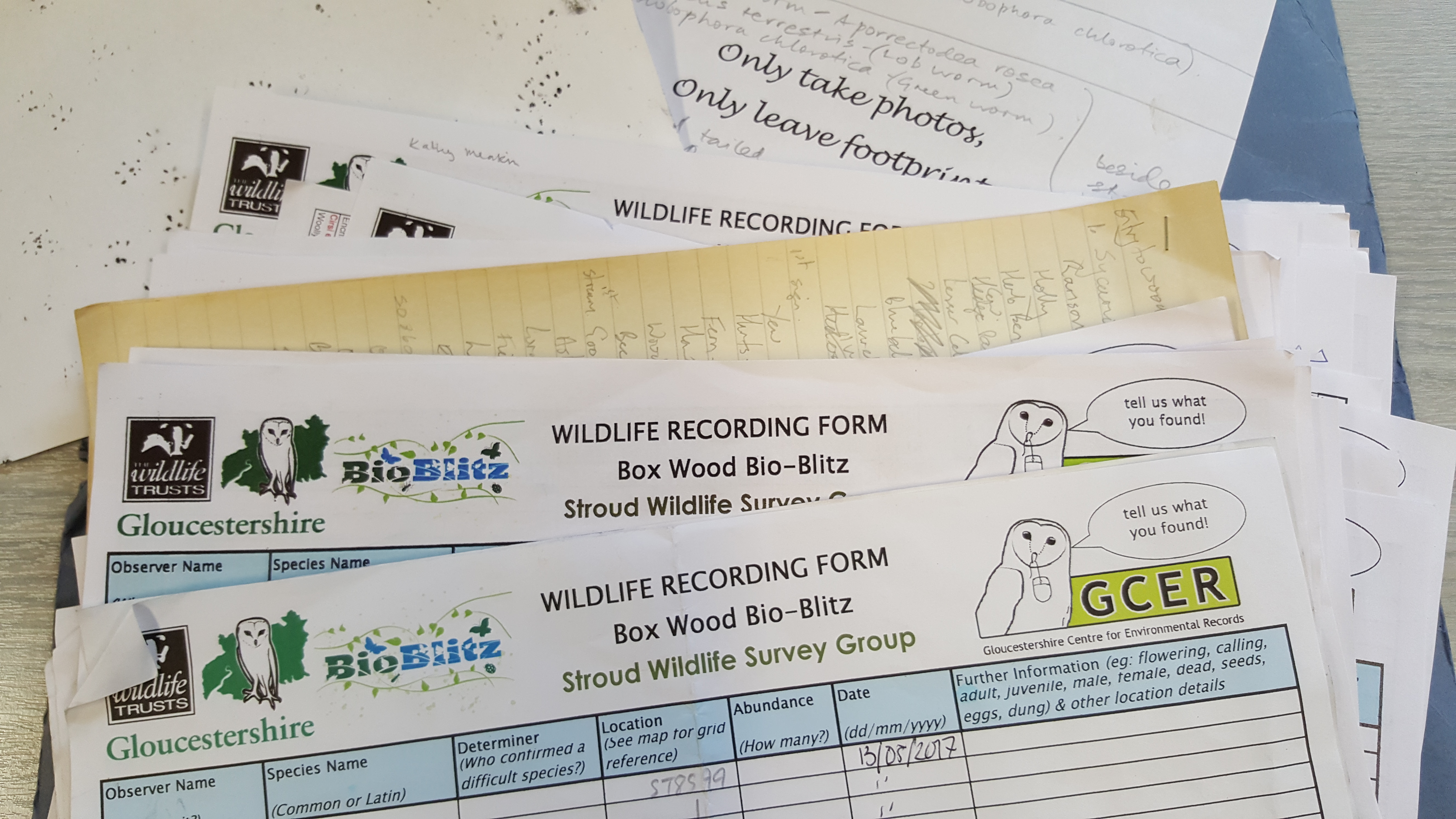 Bioblitz survey forms and pawprint tracks from hedgehog tunnels